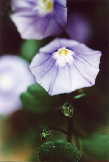 a-flower1.jpg