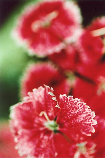 a-flower2.jpg
