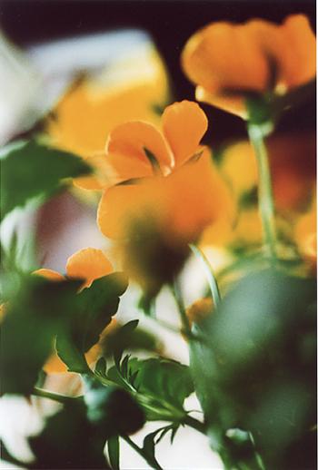 a-flower3.jpg