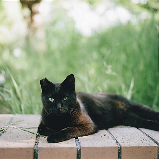 ha-cat1.jpg